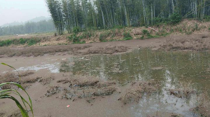 村内池塘有漂浮物.jpg